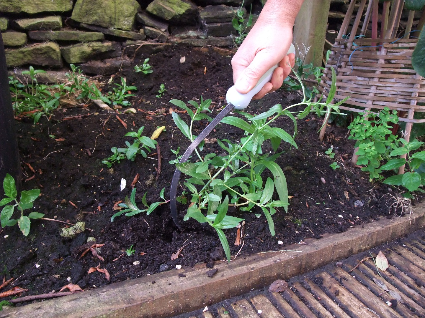 Cultimate weeder with an ergonomically designed handle for left and right handers