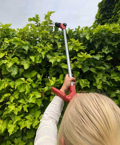 Long handle garden shears with adjustable blades being used to cut top of hedge