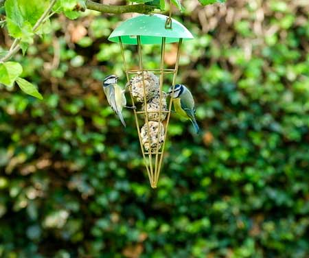Cone shaped bird feeder with a protective roof