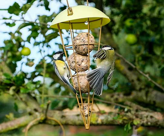 Cone shaped bird feeder with fatballs