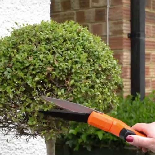 Using the one handed shears to prune Buxus ball