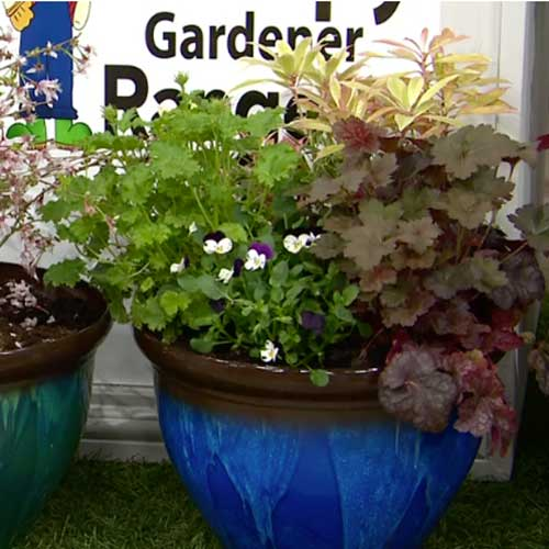 Set of four plastic planters 2 in blue and 2 in green