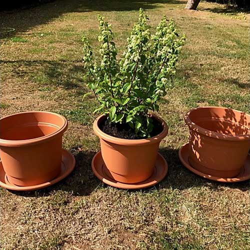 Set of 3 x 35cm Plant Pots and Saucers