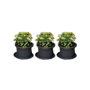 Set of three grey plant pots with saucers