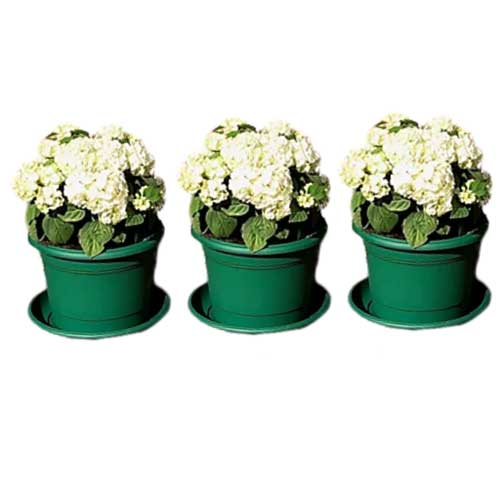 Set of three green planters with saucers