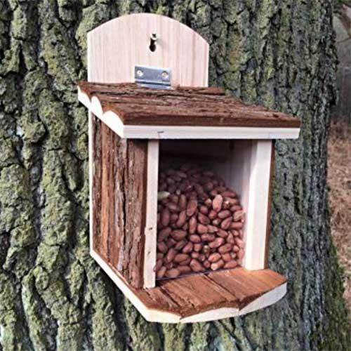 Squirrel Feeder on tree