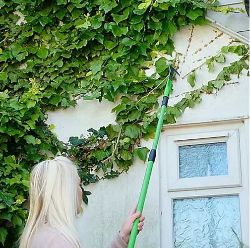 Telescopic rake broom used to pull down ivy